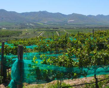 springfontein-main