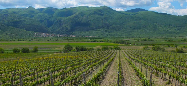 bulgaria-thracian-valley-vineyards