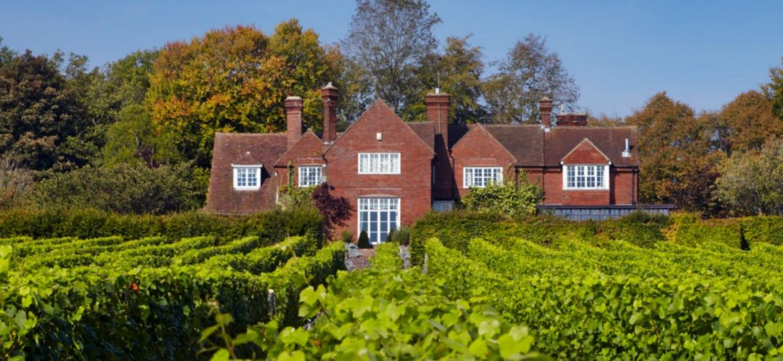 hambledon-vineyard