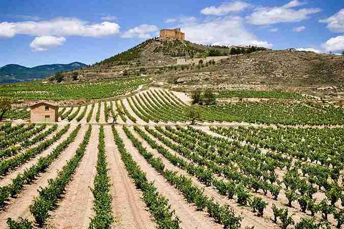 Ribera del Duero Wine Tour