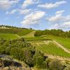 Campania Wine Tour