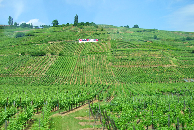 Alsace Wine Tour