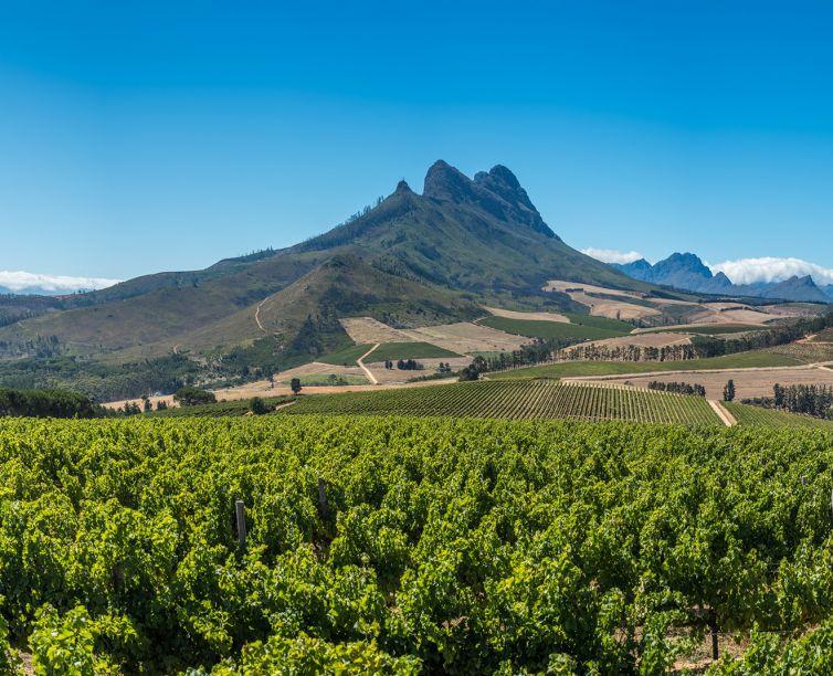 Beautiful landscape of Cape Winelands, wine growing region in So