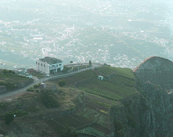 Madeira Vineyard