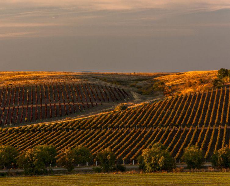 Bulgaria Wine Tour   Criterion Wine Tours